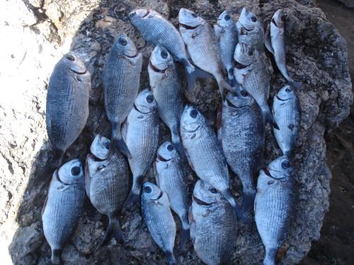 La pescata