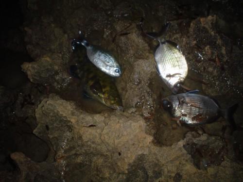 La pescata de Javi