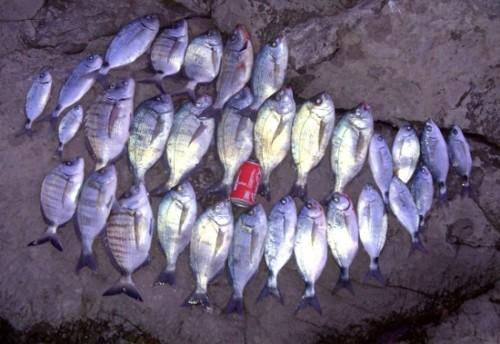 Foto pescada final