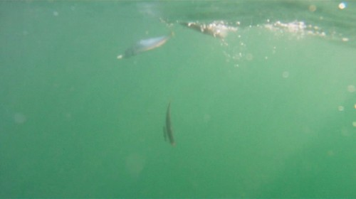 En acción de pesca