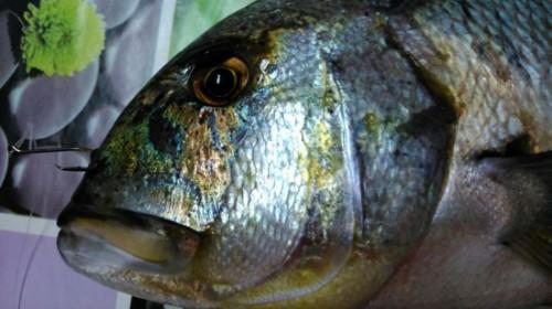Hermoso pez